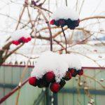 Зима контрастна и в красках тоже 😉